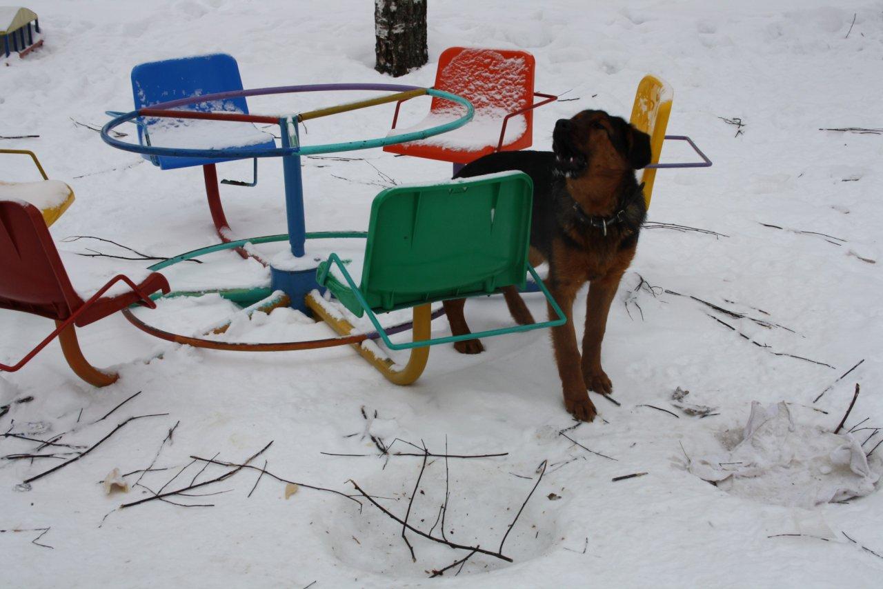 В Чепецком районе отловят 50 бродячих собак