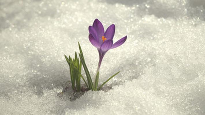 В Чепецке и области ожидаются потепление, дожди и мокрый снег