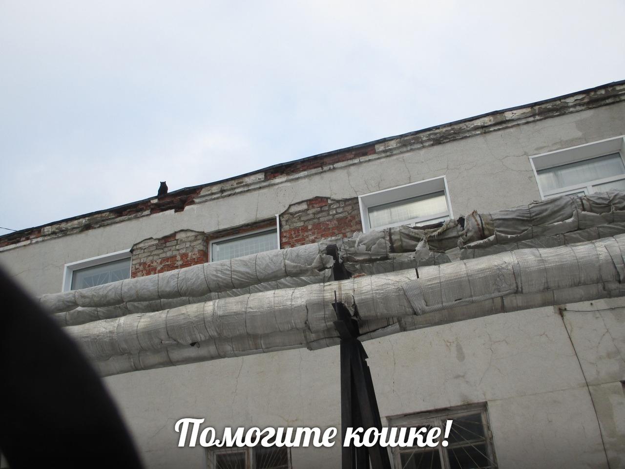 В Чепецке жители спасли кошку, которая две недели провела на крыше дома