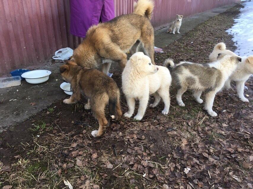 Стало известно о судьбе щенков, которых могло затопить в Кирово-Чепецке