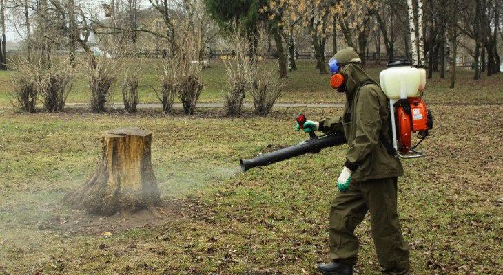 В Кирово-Чепецке пройдет обработка территории от клещей