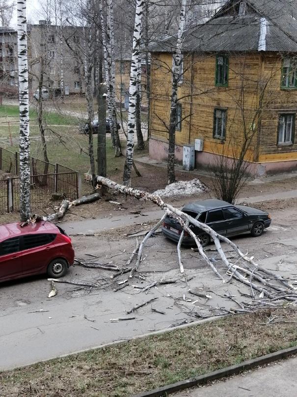 На улице Красноармейской рядом с детским садом дерево упало на машину