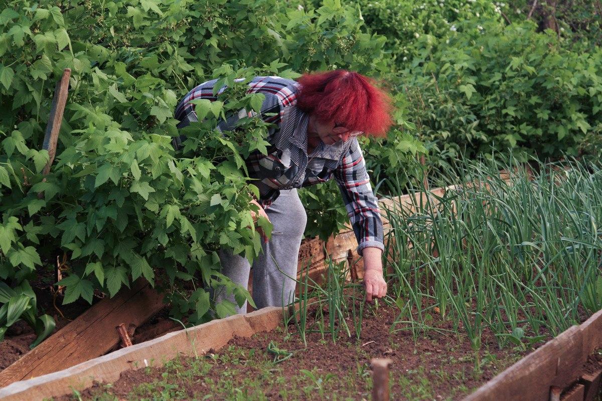 Чепчанин обворовал садовый домик, пока хозяева были заняты работой на участке