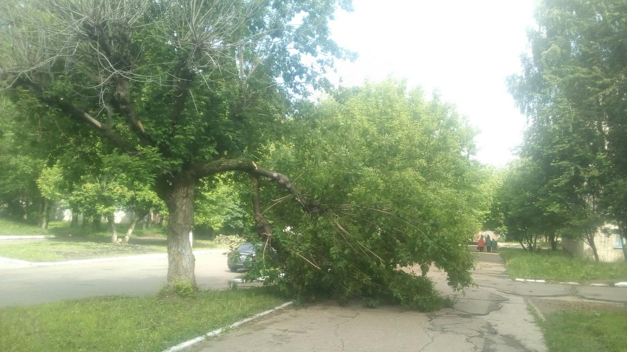 Ураган в Кирово-Чепецке сломал дерево у тротуара