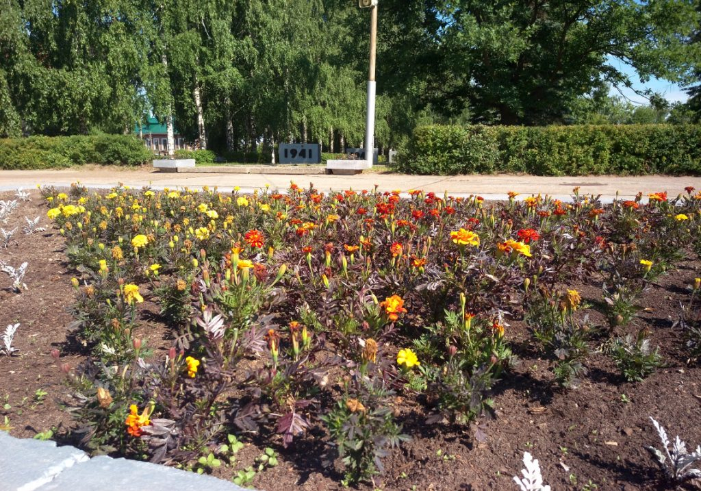 Чепчане воруют цветы и деревья с городских клумб