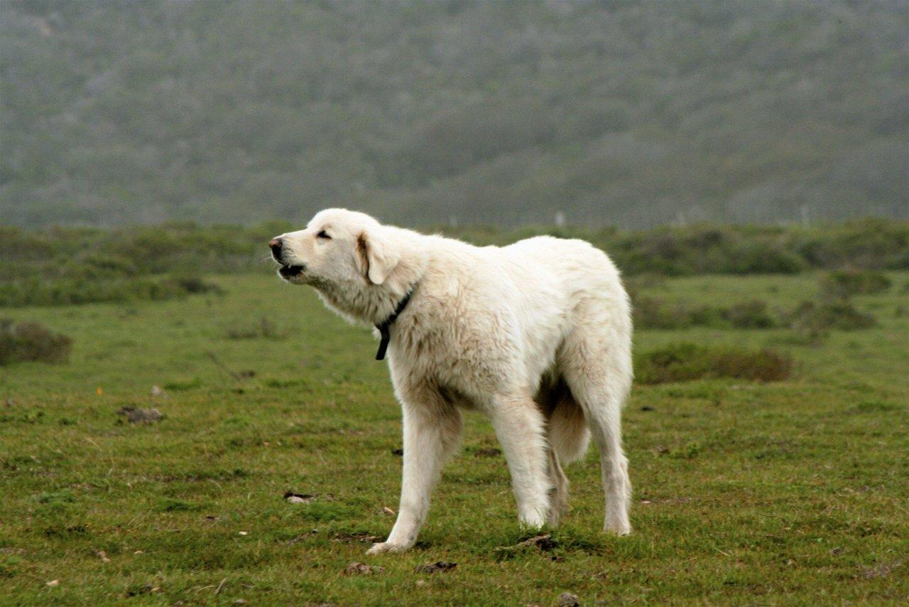 В России огласили список потенциально опасных пород собак