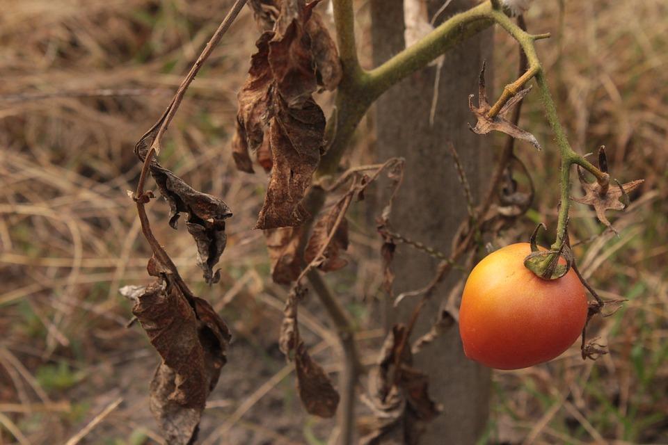 Режим ЧС: в Кировской области из -за дождей пострадали посевы