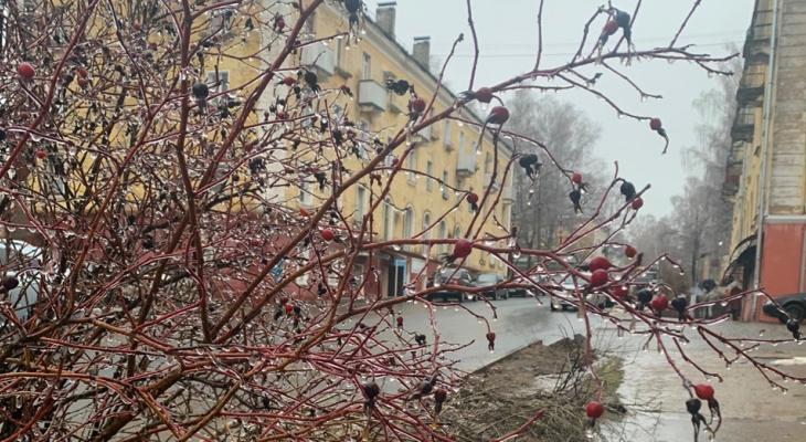 Ледяные дожди: прогноз погоды в Кирово-Чепецке с 11 по 17 ноября