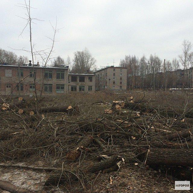 В Кирово-Чепецке на месте вырубленной рощи появится детский сад
