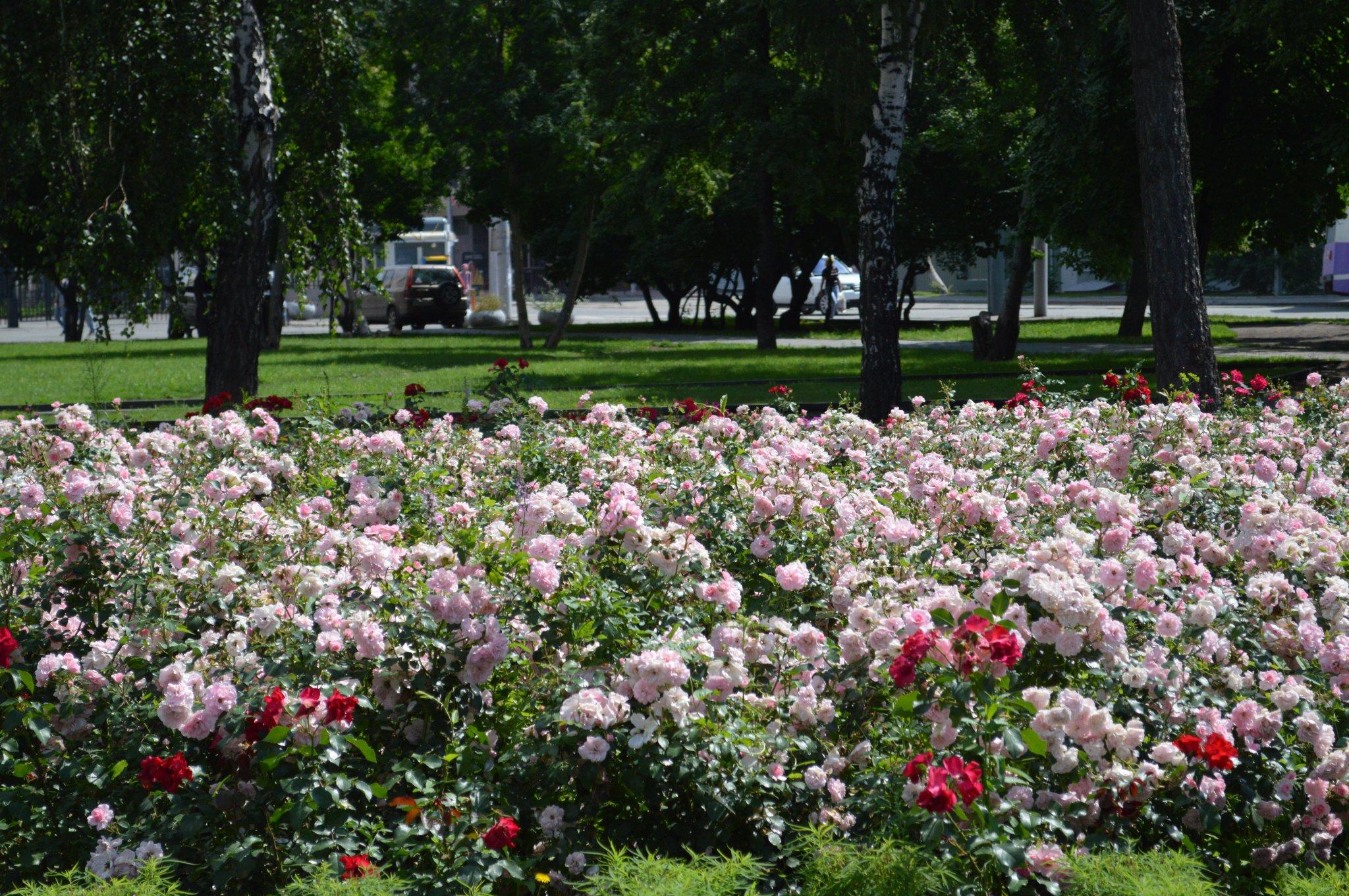 Летом 2015 года в Кирово-Чепецке высадят десятки тысяч цветов в виде надписей и фигур