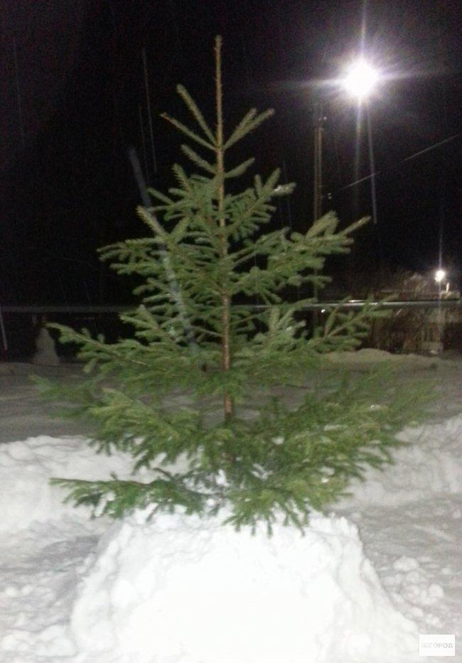 В Кировской области с детской площадки украли наряженную елку