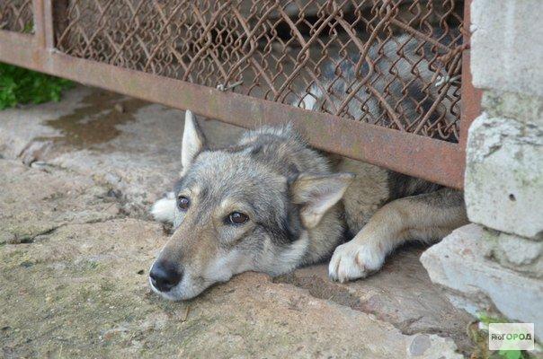 Зоозащитники предупреждают, что 20 января в Кирово-Чепецке будут орудовать убийцы собак