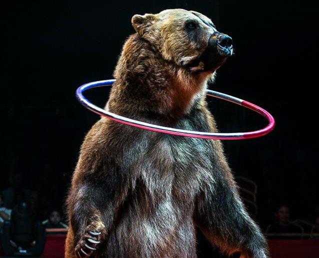 Кировский медведь Тима стал героем фильма-участника Каннского кинофестиваля