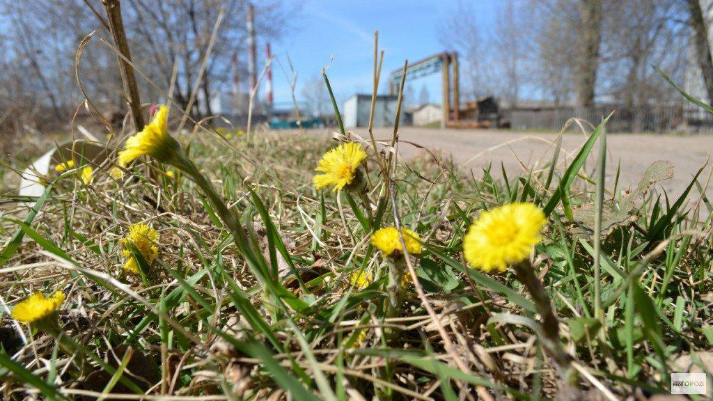Метеорологи рассказали, какой будет весна в Кирово-Чепецке