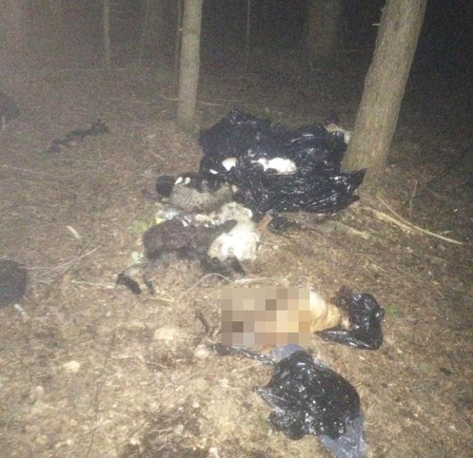 """""""Ужасный запах останков"""": в чепецком лесу найдены трупы домашних животных"""
