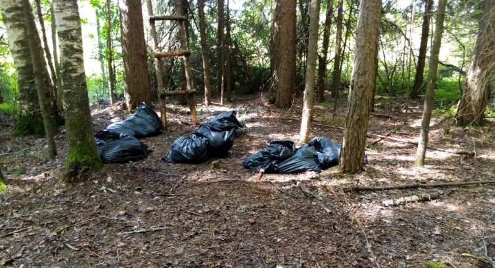 Известны результаты проверки прокуратуры после сообщений о трупах животных в чепецком лесу