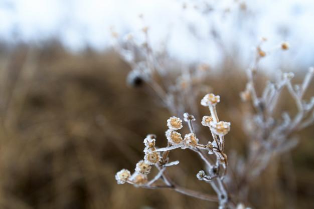 МЧС предупреждает о заморозках в Кировской области 20 и 21 сентября