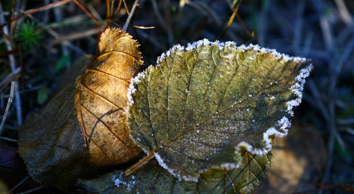 Известно, когда в Кирово-Чепецке ожидаются заморозки