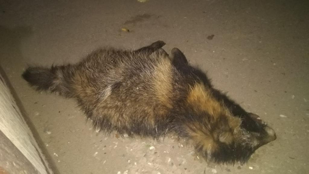 В Кирово-Чепецком районе установлен карантин по бешенству животных