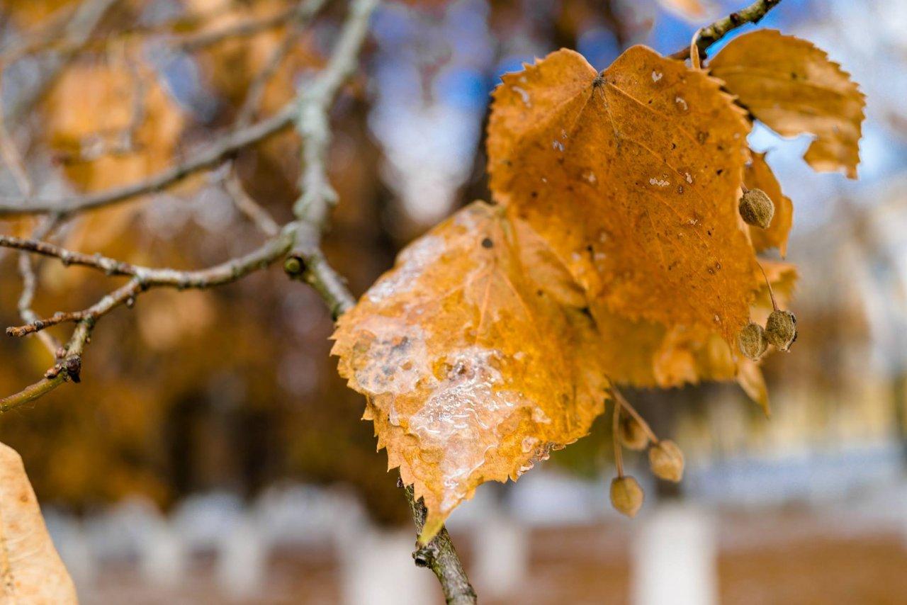 Немного осадков и потепление: прогноз погоды в Чепецке на неделю