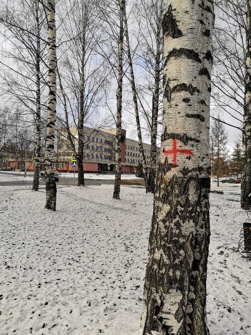 В Кирово-Чепецке на улице Первомайской на деревьях появились красные кресты
